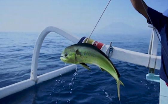 fishing in nusa penida